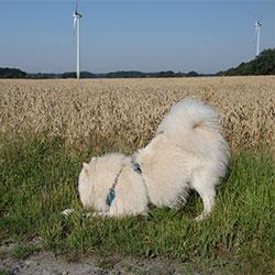 Ruffwear Front Range Hundegeschirr im Test