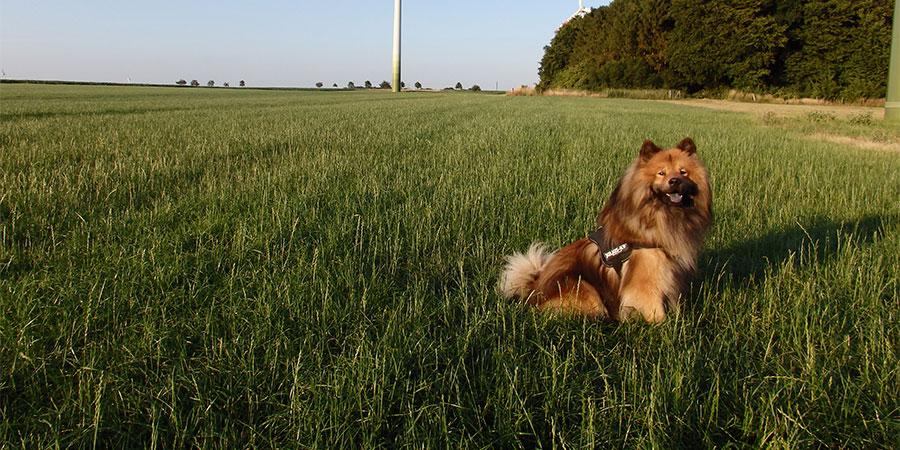 Julius K9 Hundegeschirr im Einsatz