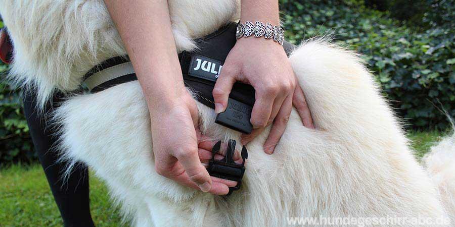Hundegeschirr anlegen und einstellen