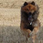 Hundegeschirr Ratgeber