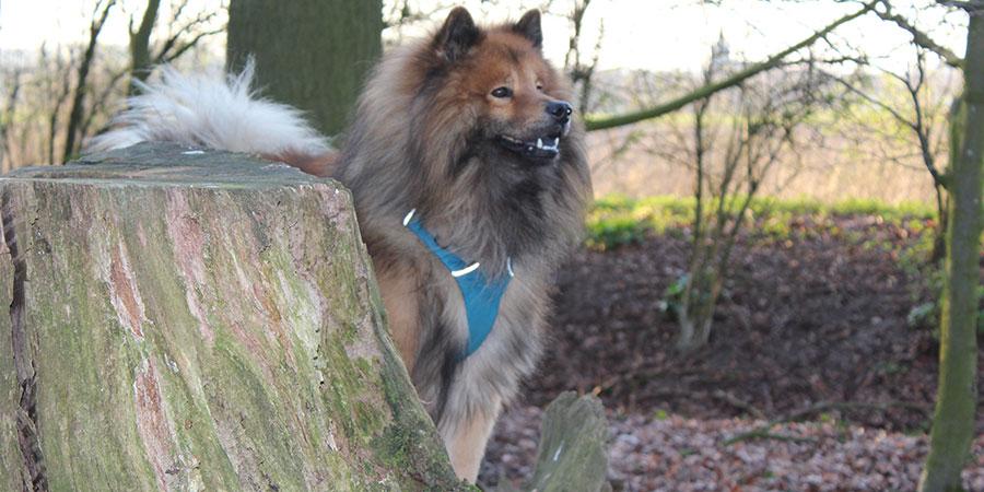 5 Gründe für den Einsatz von einem Hundegeschirr