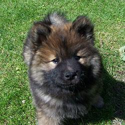 Hundegeschirr für Welpen