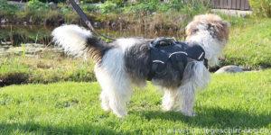 Hundegeschirr ausbruchsicher