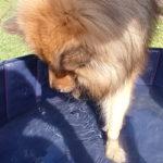 Hundepool – Eine willkommene Abkühlung für den Hund
