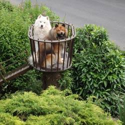 zwei Hunde auf Hundeturm