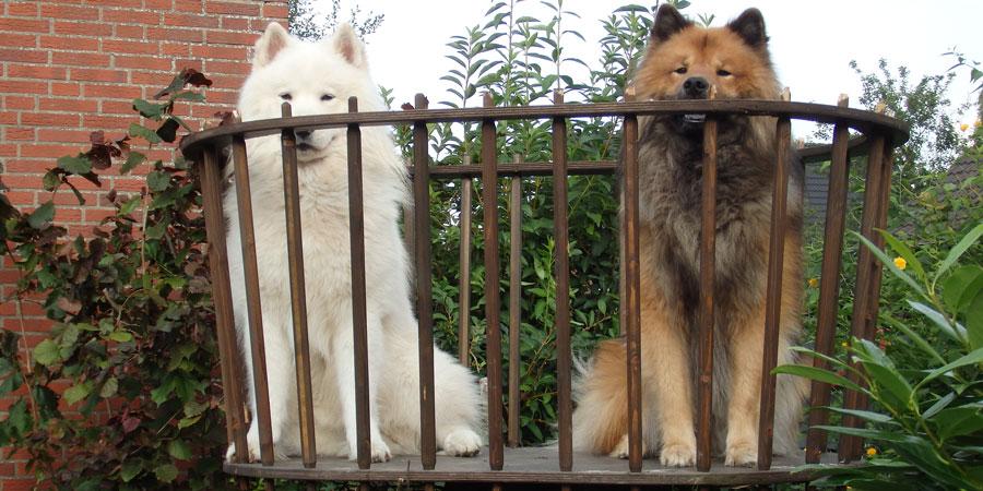 Hundeturm mit Hunden