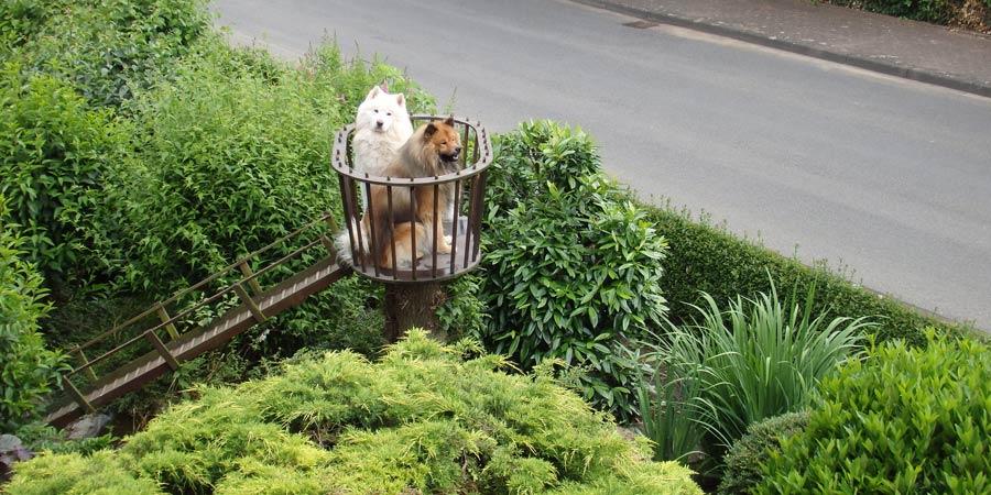 hundeturm von oben