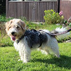 Hund mit Web Master von Ruffwear
