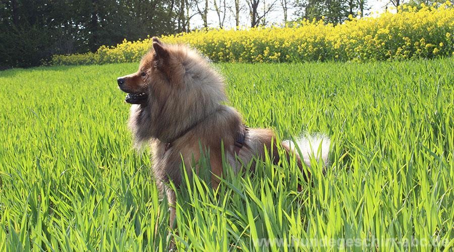 Das AnnyX Fun Hundegeschirr im Test