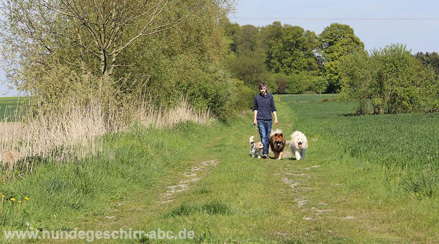 Spazieren mit drei Hunden
