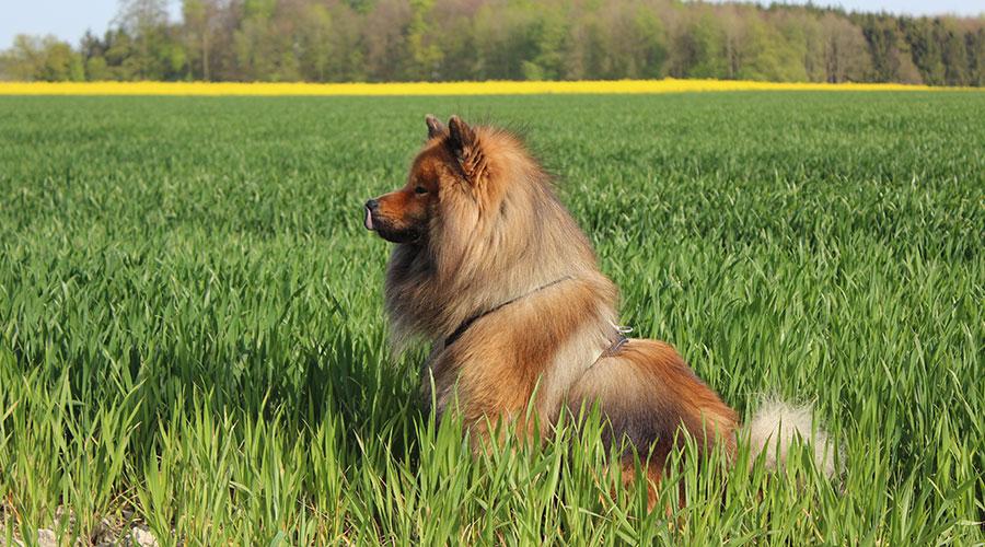Unser Hund mit dem Hunter Neopren Geschirr