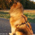 Unterschiedliche Zuggeschirre für Hunde