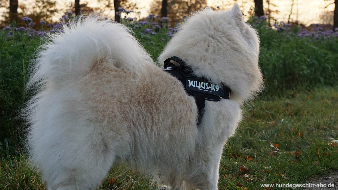Hund mit Julius K9 IDC Powergeschirr