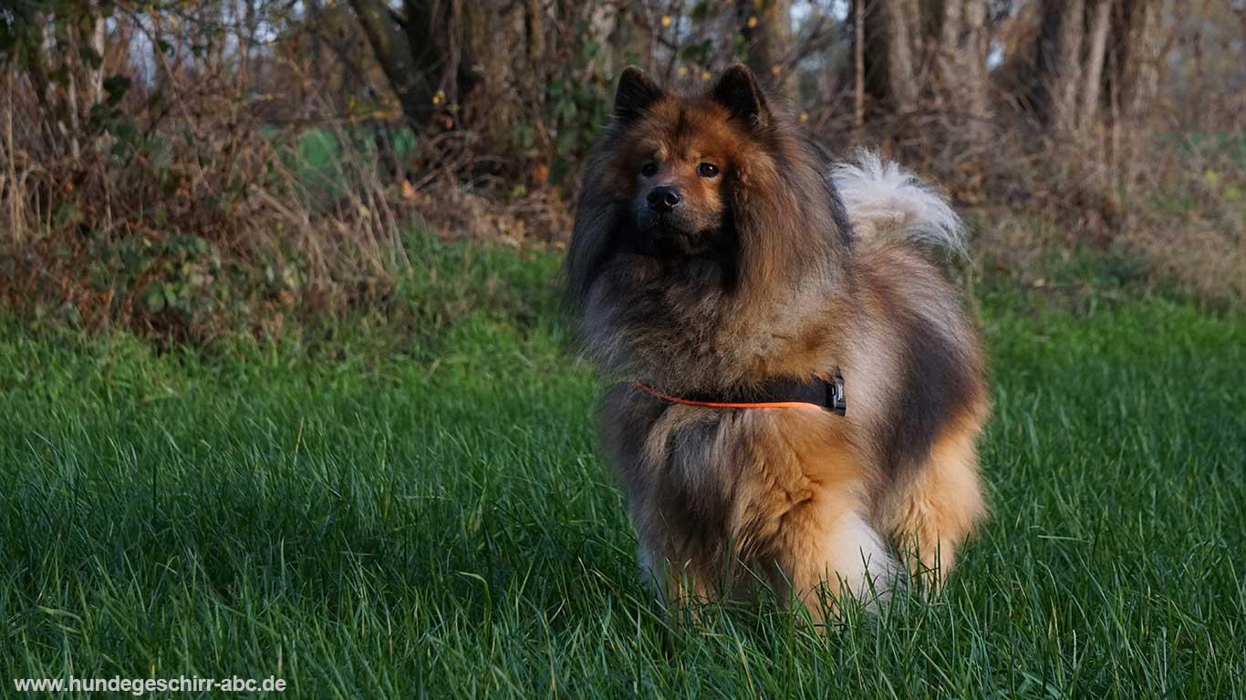 Nobby Norwegergeschirr Hund