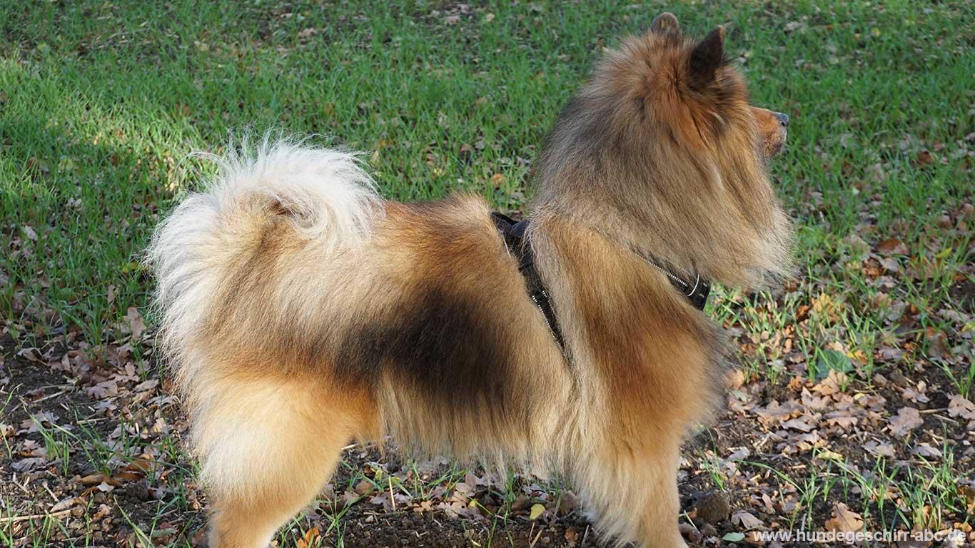 Hund mit Rabbitgoo Hundegeschirr
