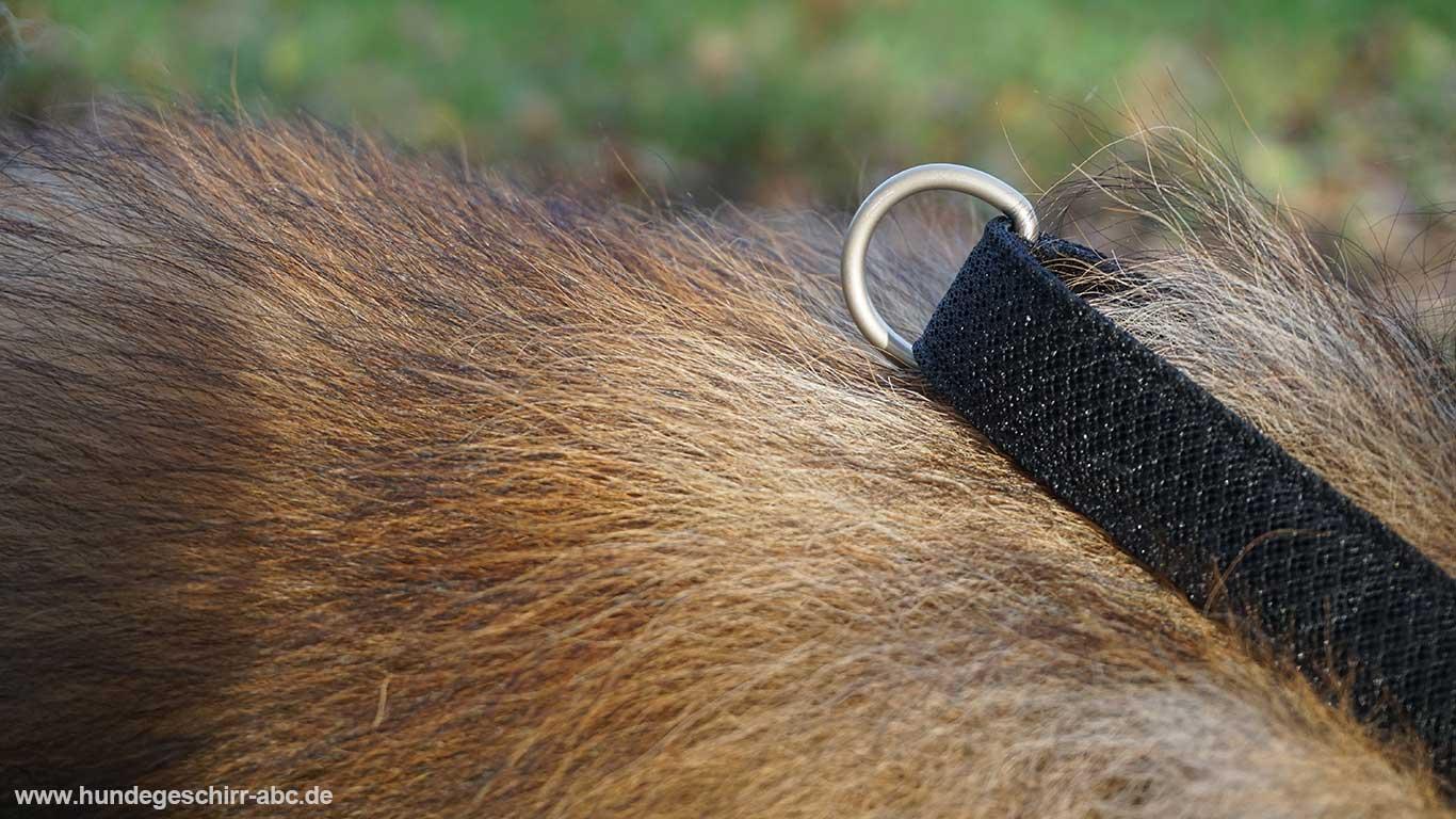 Ring für die Hundeleine