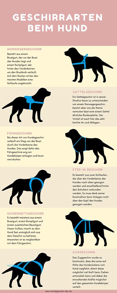 Hundegeschirr Arten Infografik