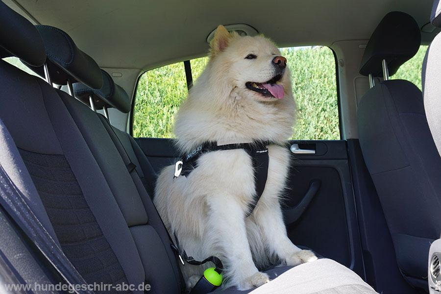 Der Hund hat ausreichend Bewegungsfreiheit